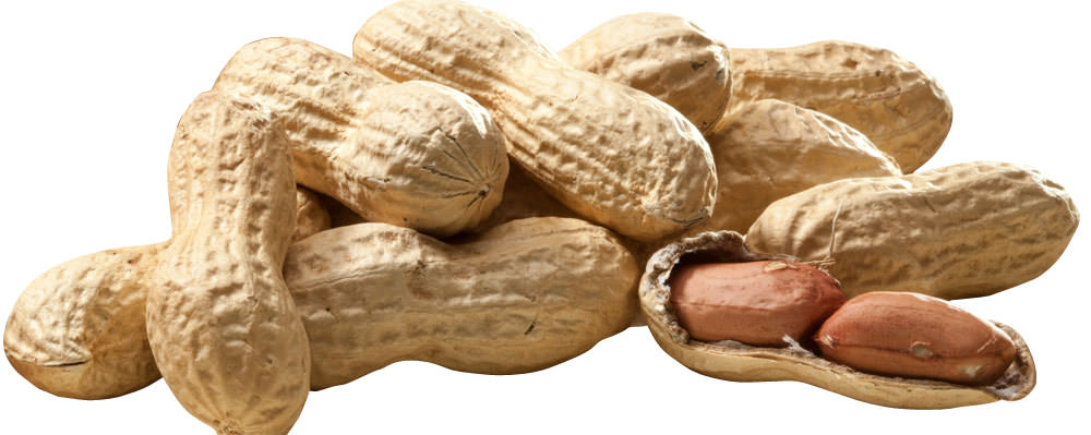 Erdnüsse Jumbo mit Schale 300g