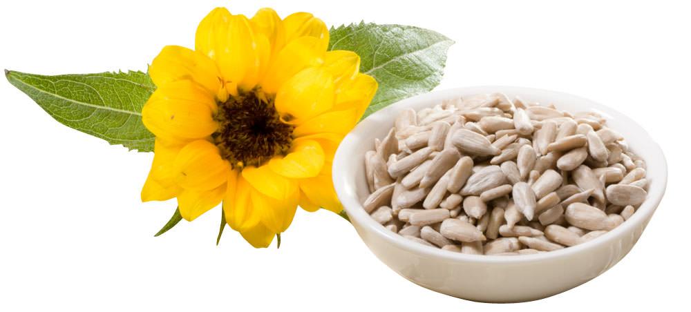 Sonnenblumenkerne - Der Energie- und Vitaminlieferant